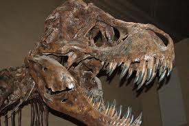 dinosaurs on display at the Museum of Natural history