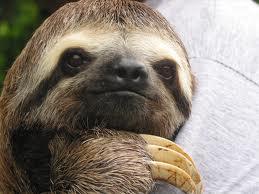 My kids feel like sloths