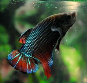 When our betta fish dies, I had to explain it to my kids