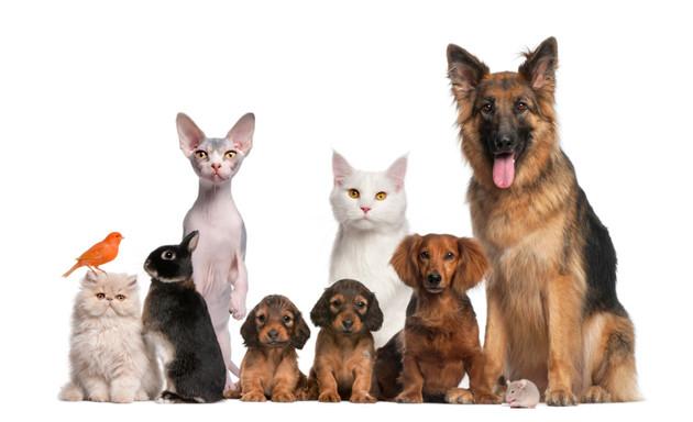 free pet adoptions