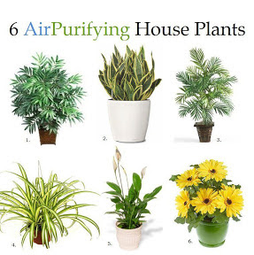 houseplants that produce the most oxygen